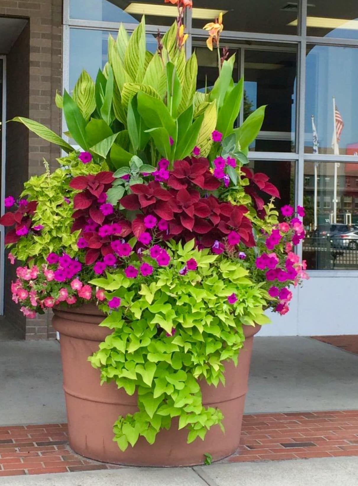 Vasi Da Giardino Colorati pin di dany su fioriere nel 2020   portafiori, giardinaggio