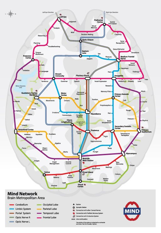 As A Subway Map.This Is What Your Brain Would Look Like As A Subway Map Beautiful