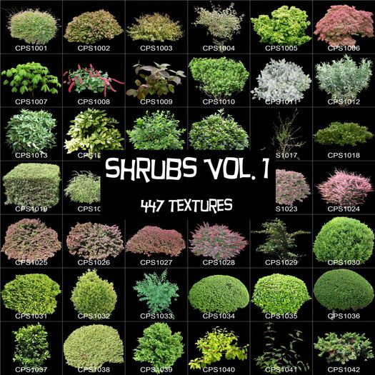 Various Selection Of Shrubs