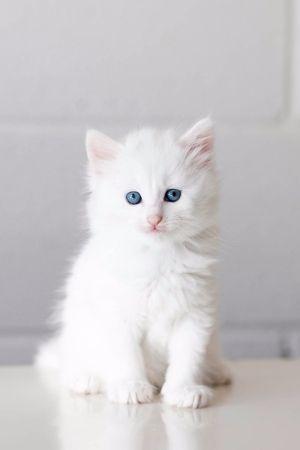 ResQte The Week   http://bit.ly/1Qwv2MH New Cute...