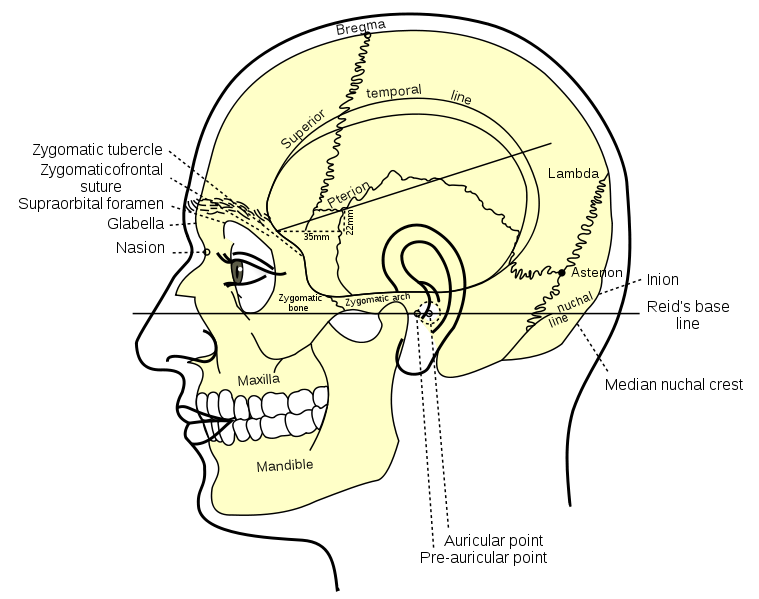 Filegray1193g Anatomy Pinterest
