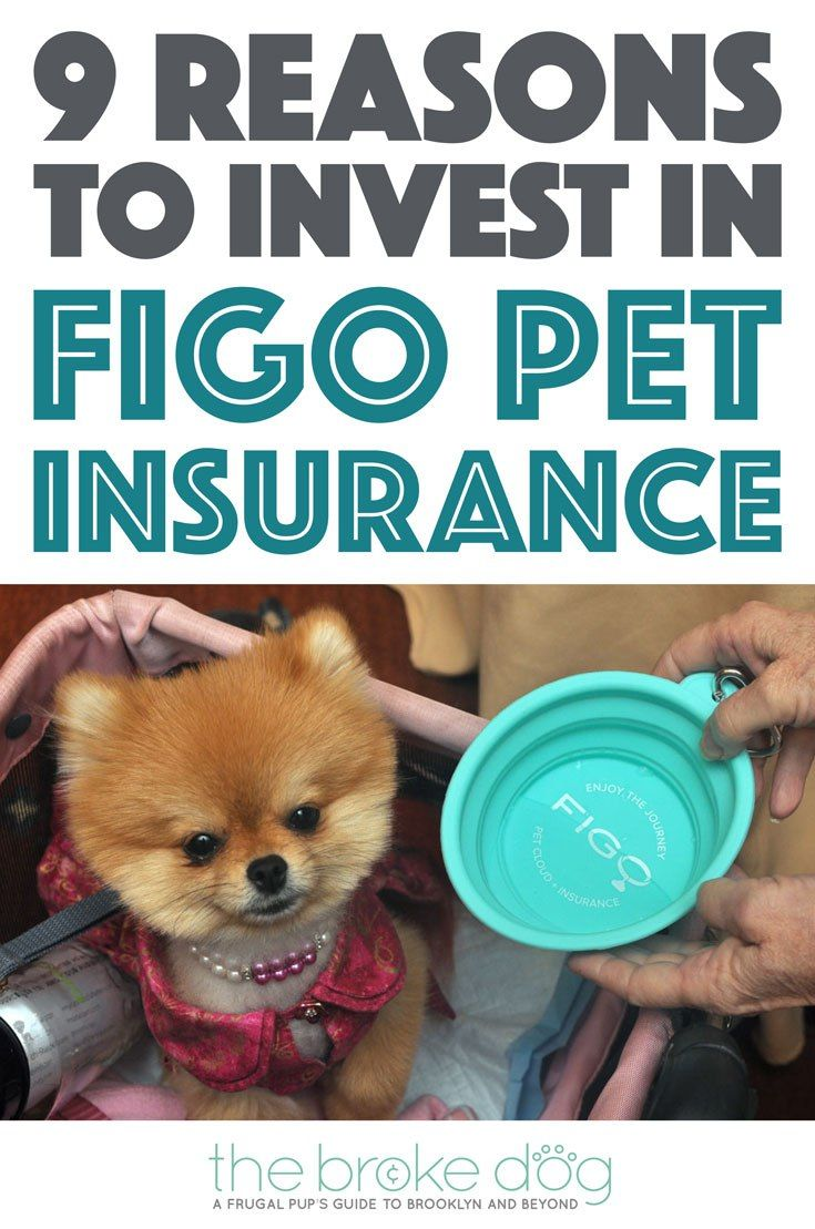 9 Reasons You Should Invest In Figo Pet Insurance Pet Health