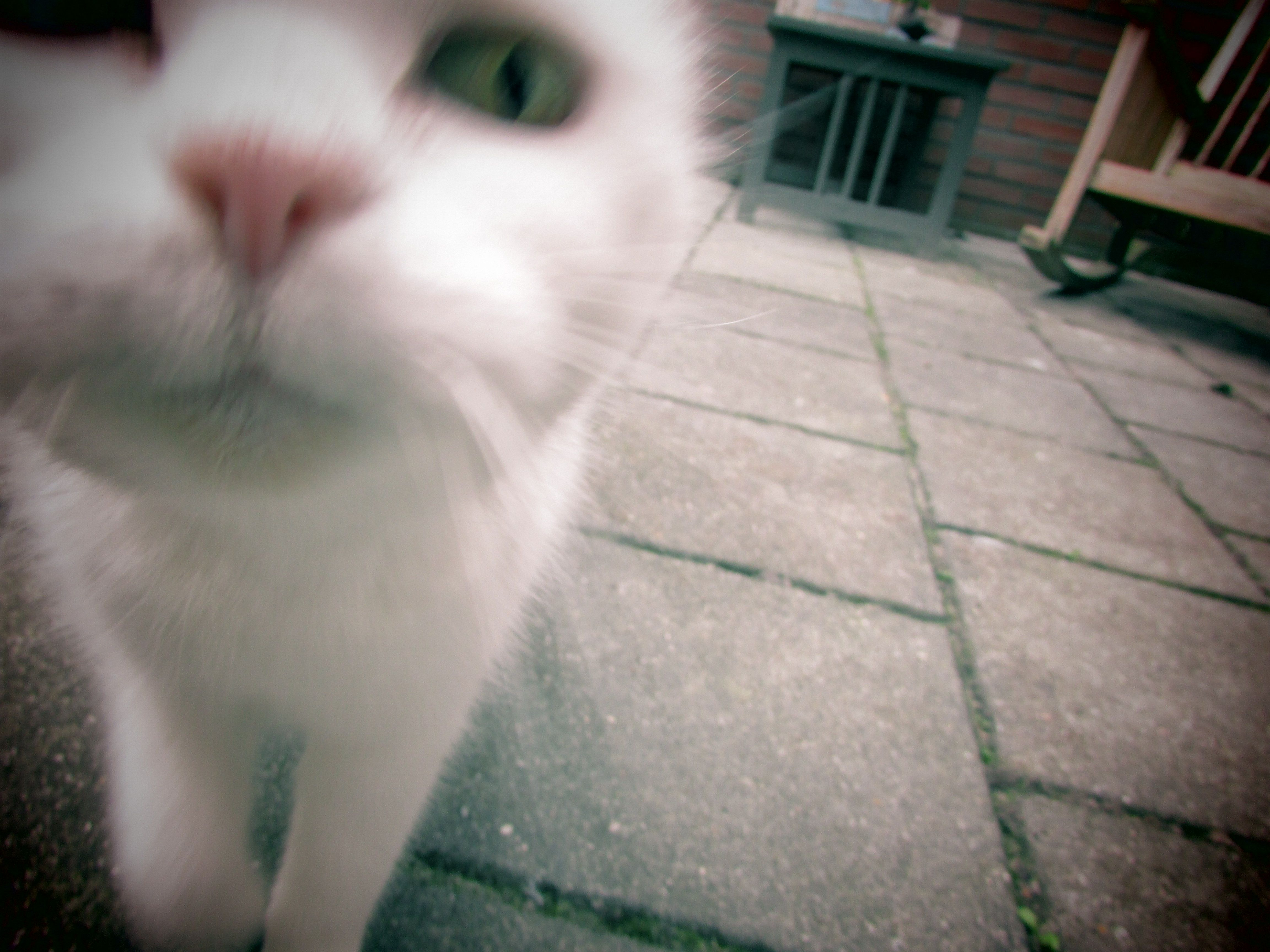 Close Encounter Of The Cat Kind With Images Cats Close Encounters