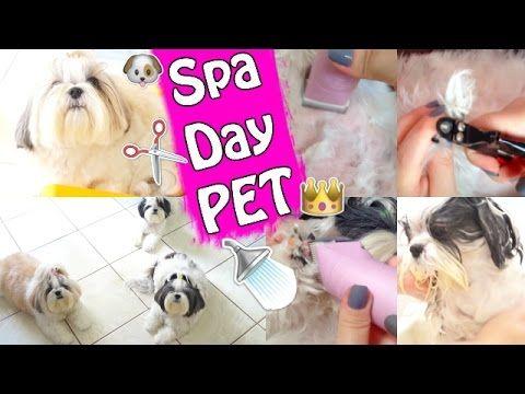 Spa Day Pet Em Casa   BANHO e TOSA Em Shih Tzu - Cuidados de Higiene e B...