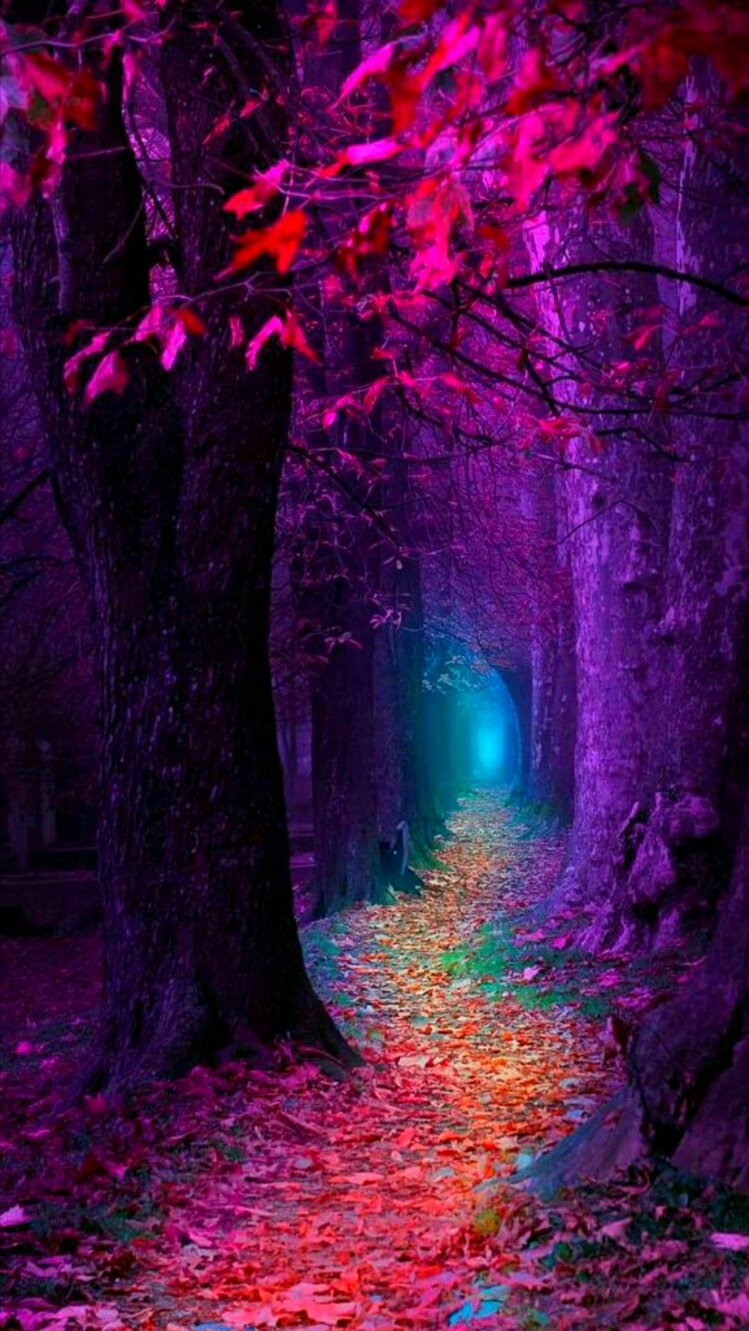 This magical forest Is beyond belief So many colors I see