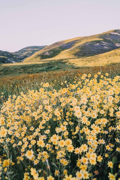 California Super Bloom Photograph — Bessie Young Photography