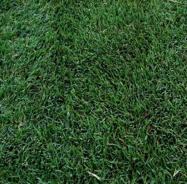 What Grass Should You Use For Your Arizona Lawn Arizona