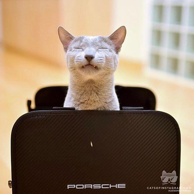 """Kitty Photo From @psayopsayo: """"Monday ....😩😔😣"""""""