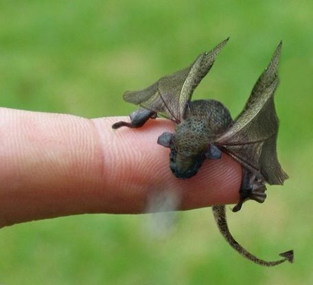 A tiny magical dragon...oh I need one of my own. (look at ...