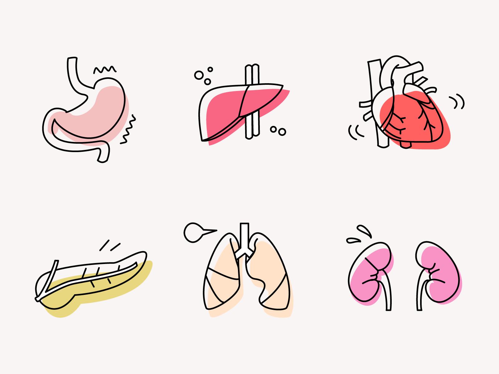 Human Organs Human Organ Medical Illustration Medical Icon
