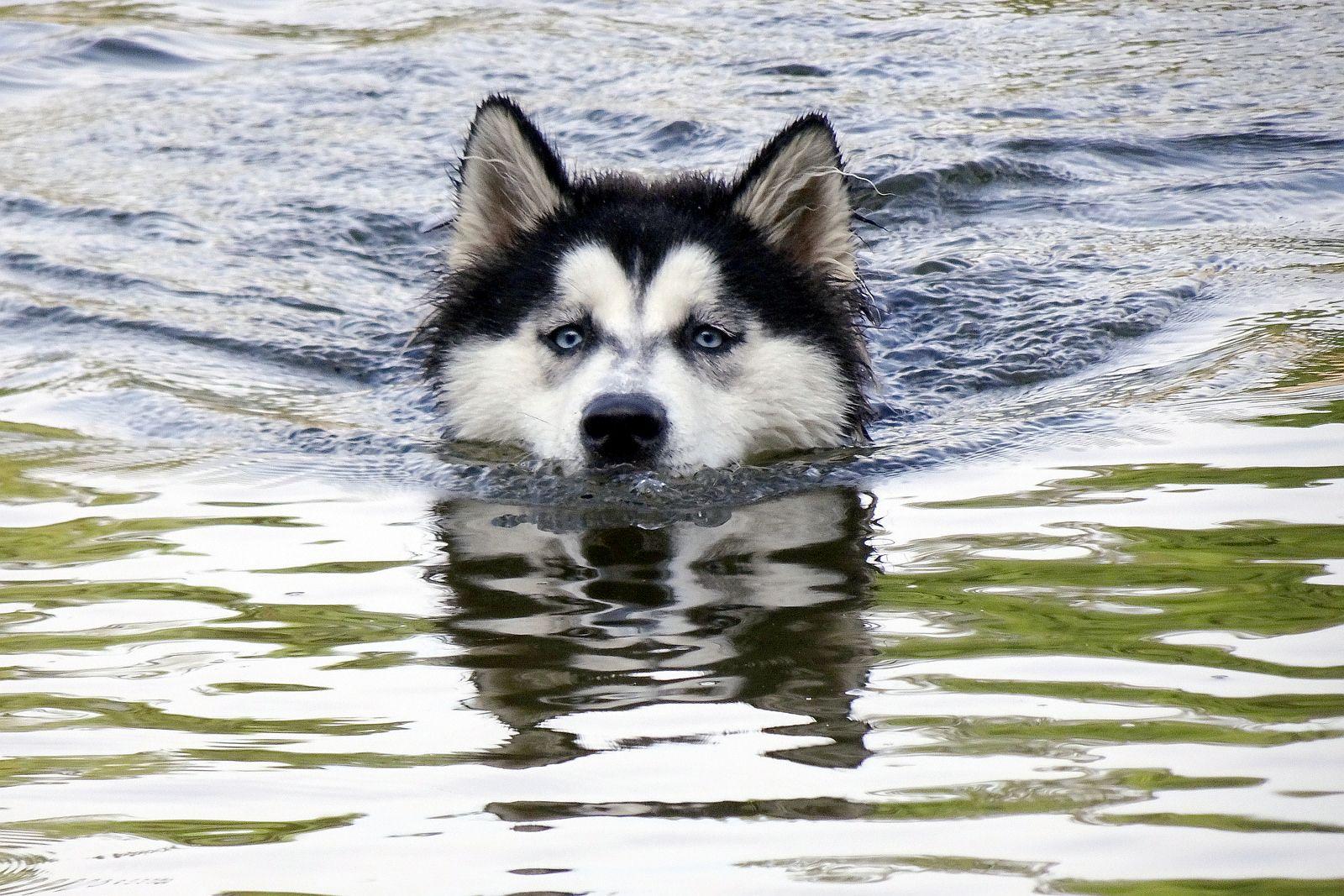 Популярные и оригинальные имена для хаски – какую кличку дать собаке | 1067x1600