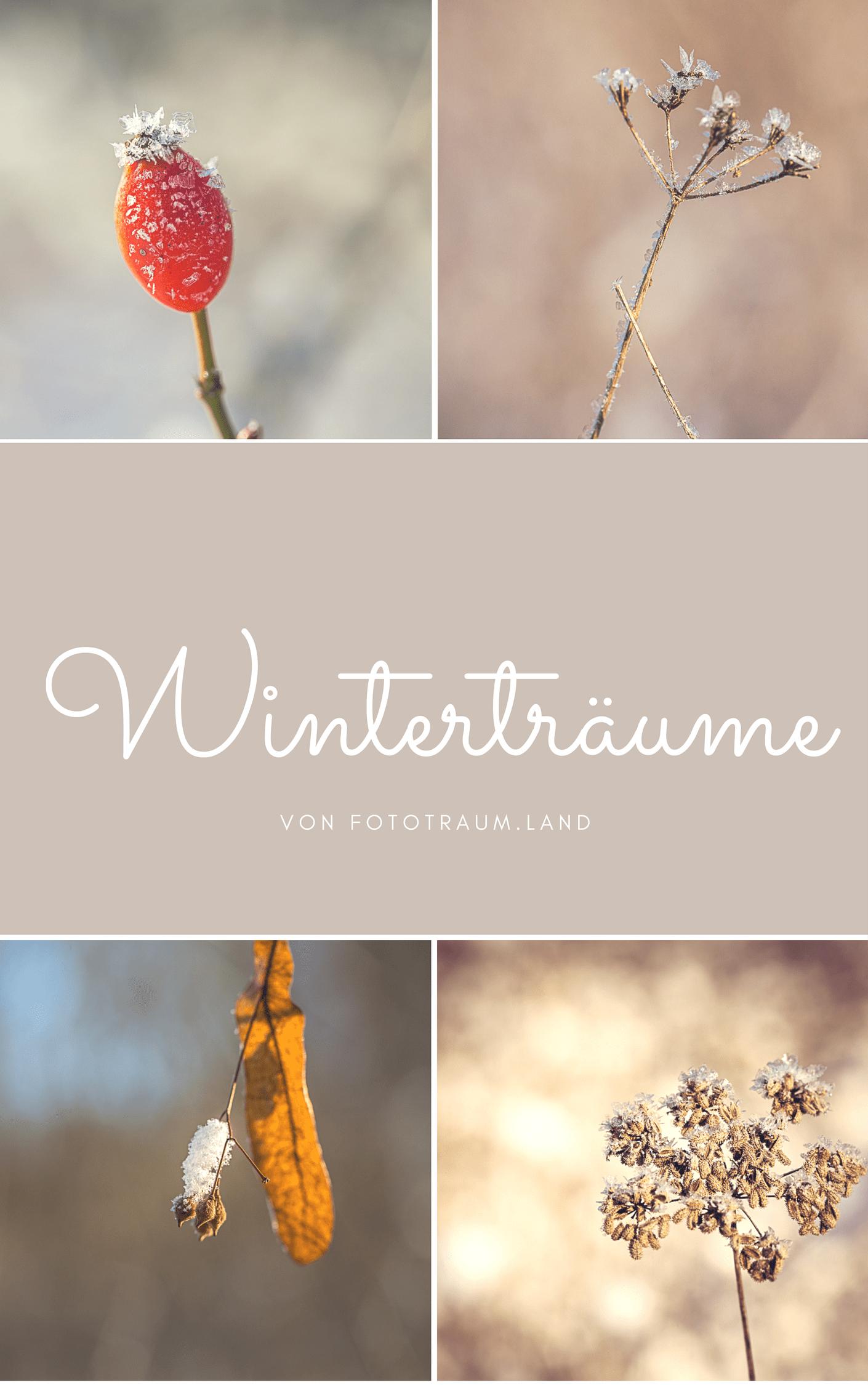 Der Frost liefert im Winter so viele tolle Fotomotive – also schnapp dir deine Kamera und los geht's!