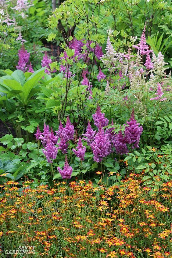 Shade loving perennial flowers 15 beautiful choices for your garden shade loving perennial flowers 15 beautiful choices for your garden pinterest perennials shade perennials and flower mightylinksfo