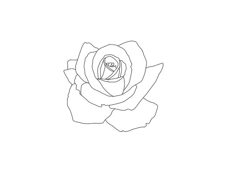 Tattoo Outline Drawing Sketches In 2020 Small Rose Tattoo Tattoo Outline Drawing Simple Rose Tattoo