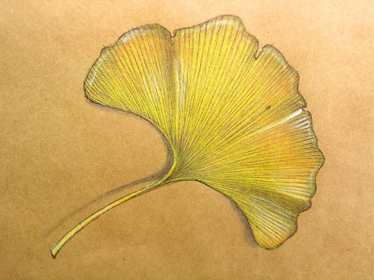 Ginkgo Leaf Art   Leaves, Drawings and Leaf art