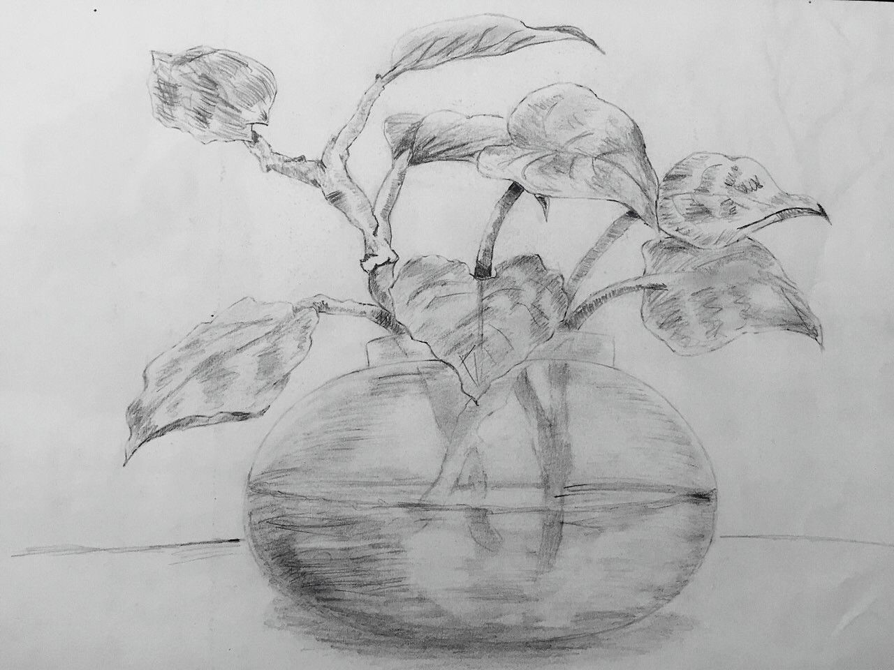 sketch of a money plant....   Plant sketches, Sketches ...