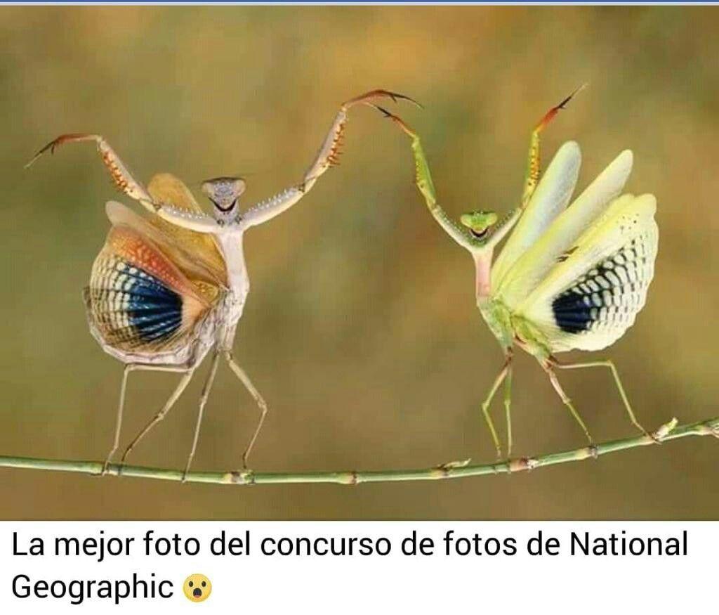 Pin de sandra alanis en animales pinterest