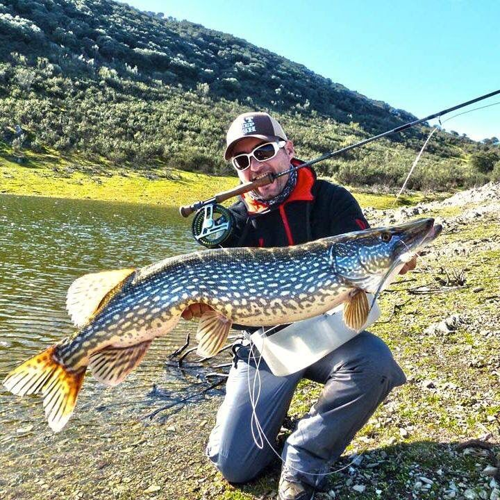 Awesome northern pike on the fly.