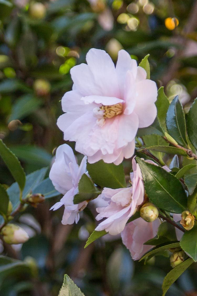 15 of the best plants that bloom in fall fall plants
