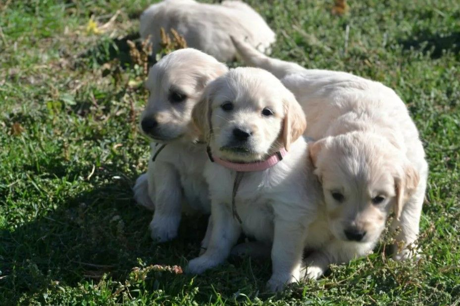 100 Unique Boy Puppy Names Boy Puppy Names Puppy Names Dog Names