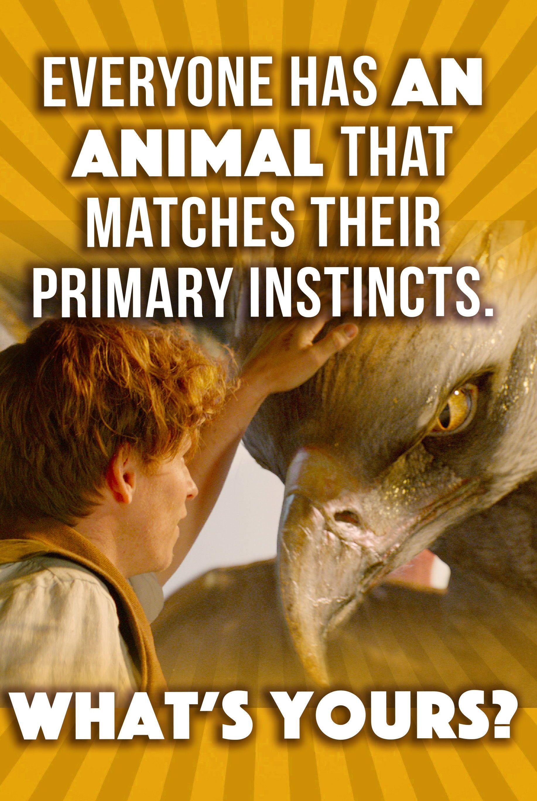 Wild Animal Riddles Key English Esl Worksheets In 2020 Animal Riddles Animals Wild Animal Facts For Kids