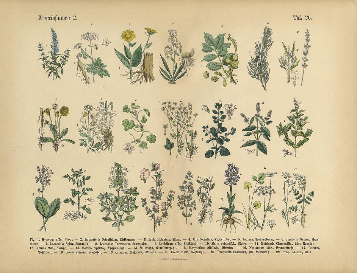 Medicinal And Herbal Plants Victorian Botanical Illustration Jolie Clothing Melish Dress Gold M