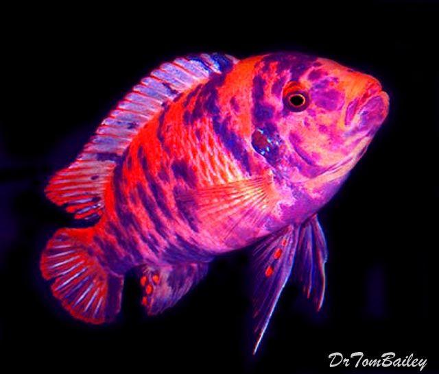 Aquariumfish Net Fish Aquarium Fish Goldfish For Sale