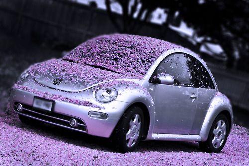 volkswagen  beetle  pinkrobstaubphotopicture  day  lavender violet