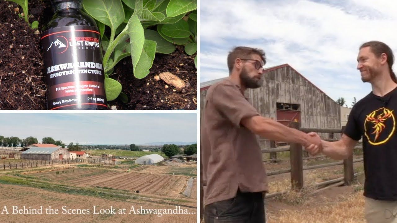 As a top Adaptogen Ashwagandha is mostly used to support