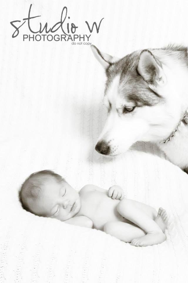 Newborn Husky Www Studiowphoto Com Mailto Studiowinfo Yahoo Com