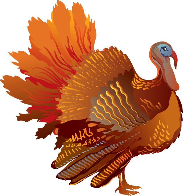 15+ Colorful Turkey Animals Clipart