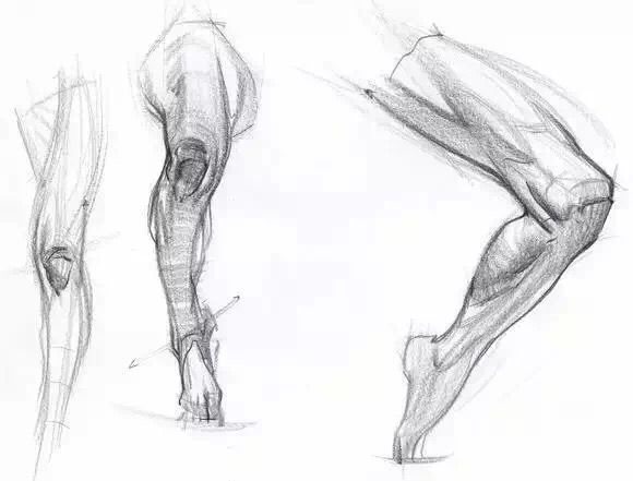 Life Drawing Ref Anatomy Pinterest Drawings Anatomy And
