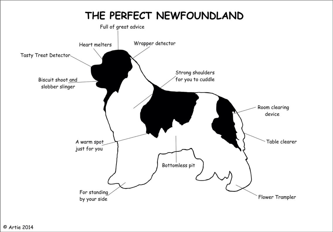 Pin On Newfoundlands