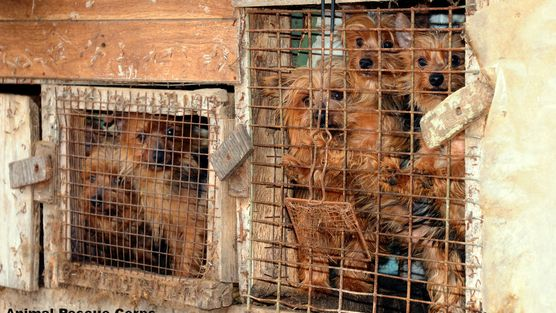 Pet Ranch Thornton: STOP SELLING PUPPY MILL DOGS