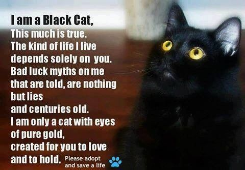 Savvy Pet Care There S No Place Like Home Black Cat Appreciation Day Black Cats Rock Black Cat