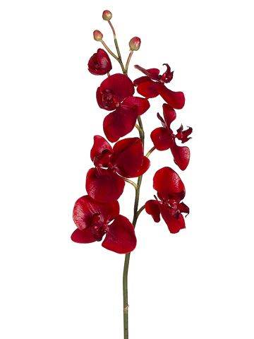 Artificial phalaenopsis orchids tropical silk flowers afloral artificial phalaenopsis orchids tropical silk flowers afloral same day shipping 1300 mightylinksfo Choice Image