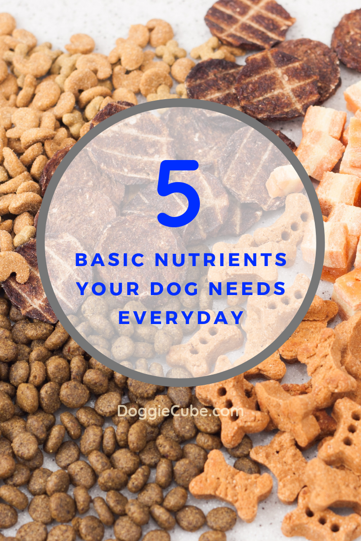 5 Basic Nutrients Your Dog Needs Everyday Doggie Cube