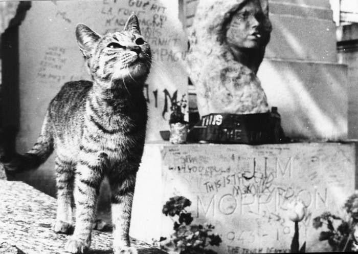 Cat and Jim