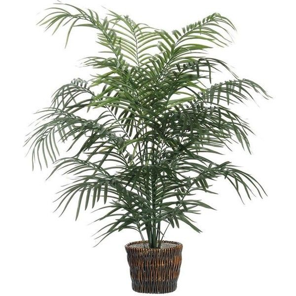 5 Artificial Potted Extra Full Dwarf Palm Tree In Brown Pot 185 Liked On Polyvore Featuring Home Decor Fl Filler