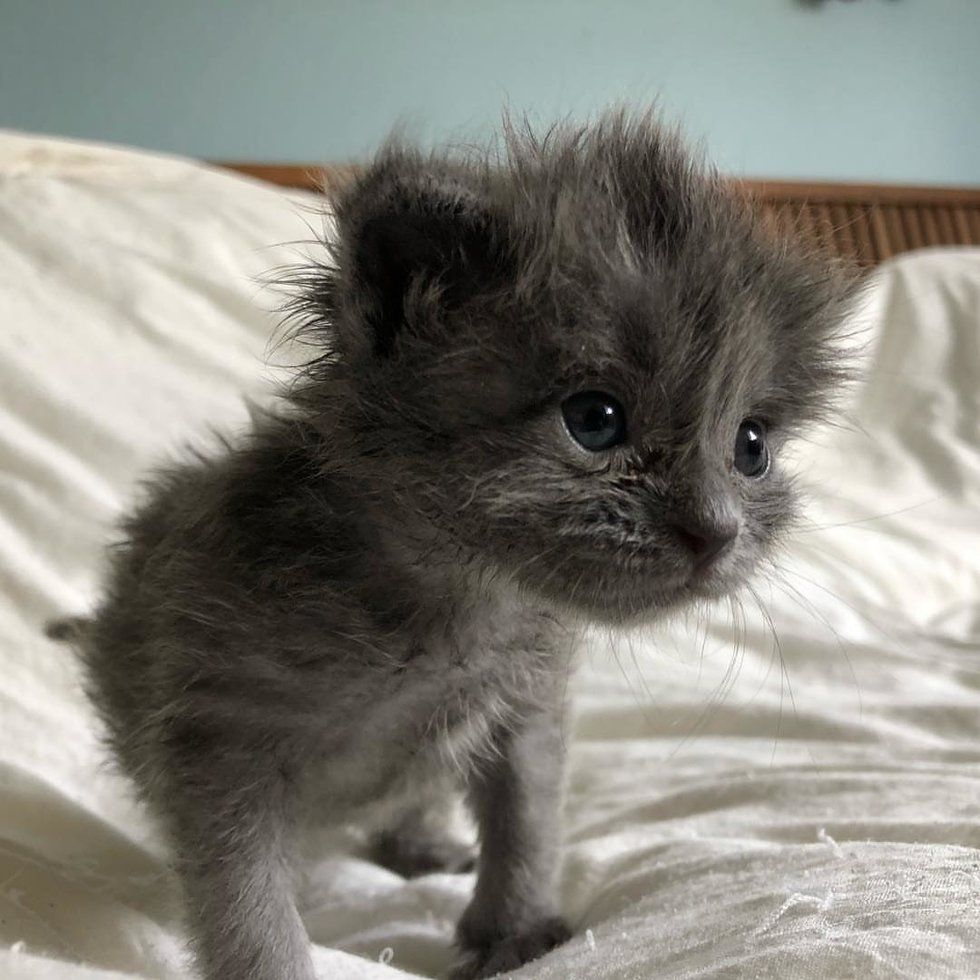 Kitten Found All Alone Just Days Old Bounces Back And Grows A Fluffy Hairdo Love Meow Cutestkittens Kitten Meowing Kittens Kitten