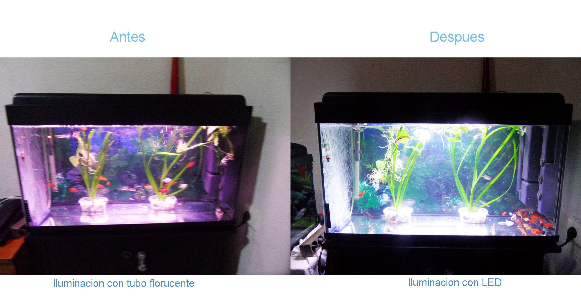bc874529bae34d5fce769f34f0ec2109 Luxe De Aquarium 100l Des Idées
