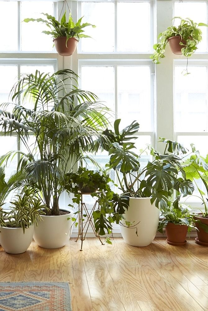 8 Houseplants That Can Survive Urban Apartments Low Light 640 x 480