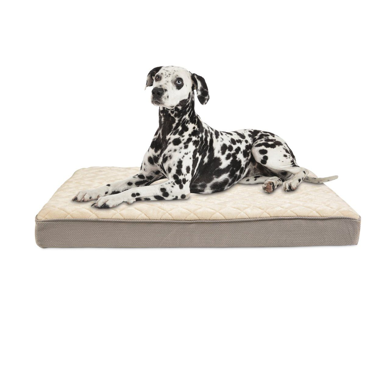 Bookdrawer Doctors Foster Smith Orthopedic Lounger Dog Bed Foster And Smith Orthopedic Dog Bed Dog Bed
