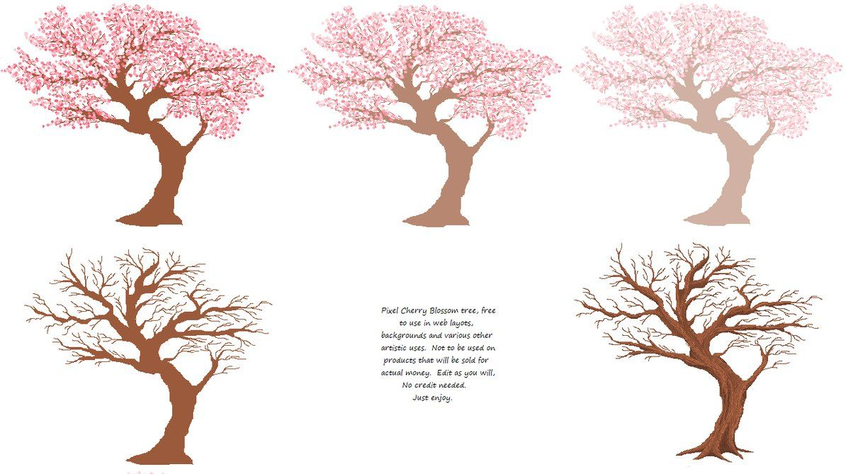 Cherry Blossom Tree Drawing Outline