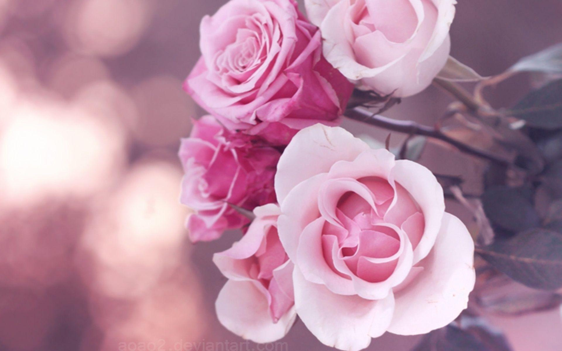Epingle Par Le Paih Emeline Sur Fleurs Fond D Ecran Fleur Rose Fleur Rose Papier Peint Rose