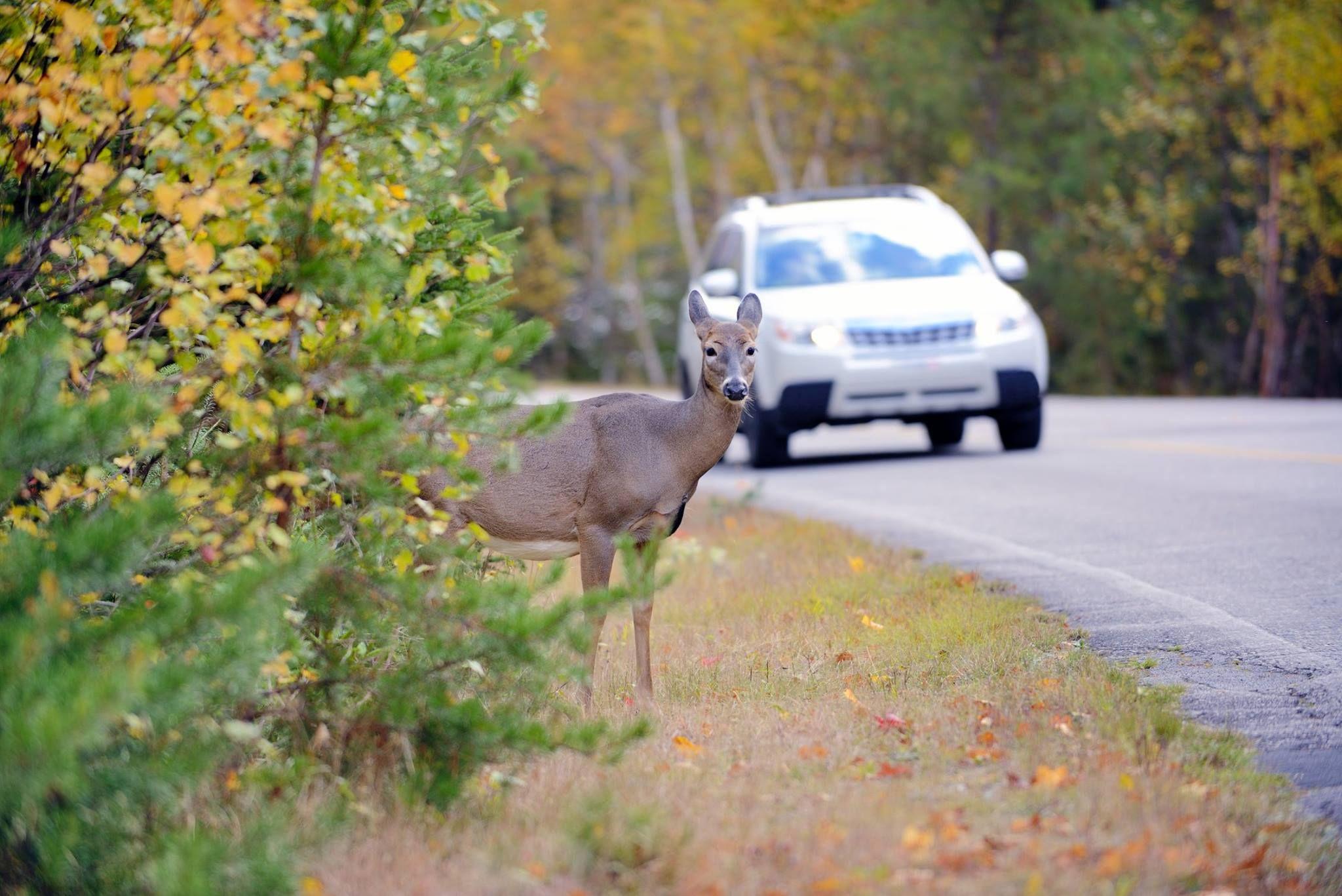 November has the most deervehicle crashes. Ohio drivers