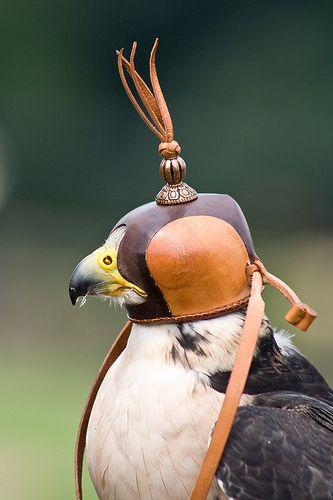 Pin By Karen On Hawking Falconry Falconry Equipment Pet Birds Falconry