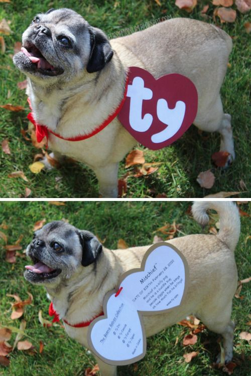 3cdfd1f6963 DIY Beanie Baby Pet Costume Tutorial and Template from Pugdemoniom. This  has got to be the easiest pet costume ever. All you need is red and white  paper and ...