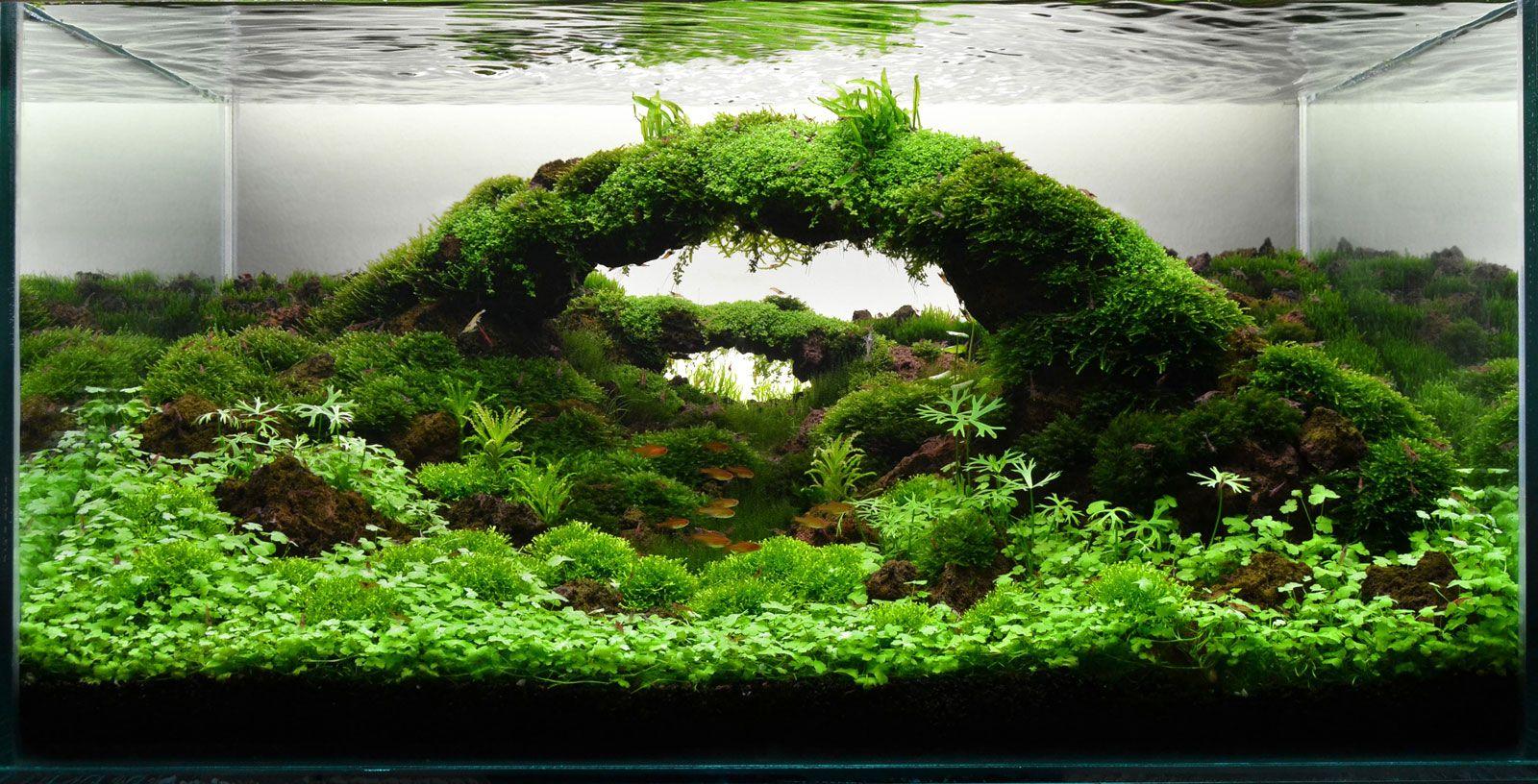 Ландшафтные картинки для аквариума