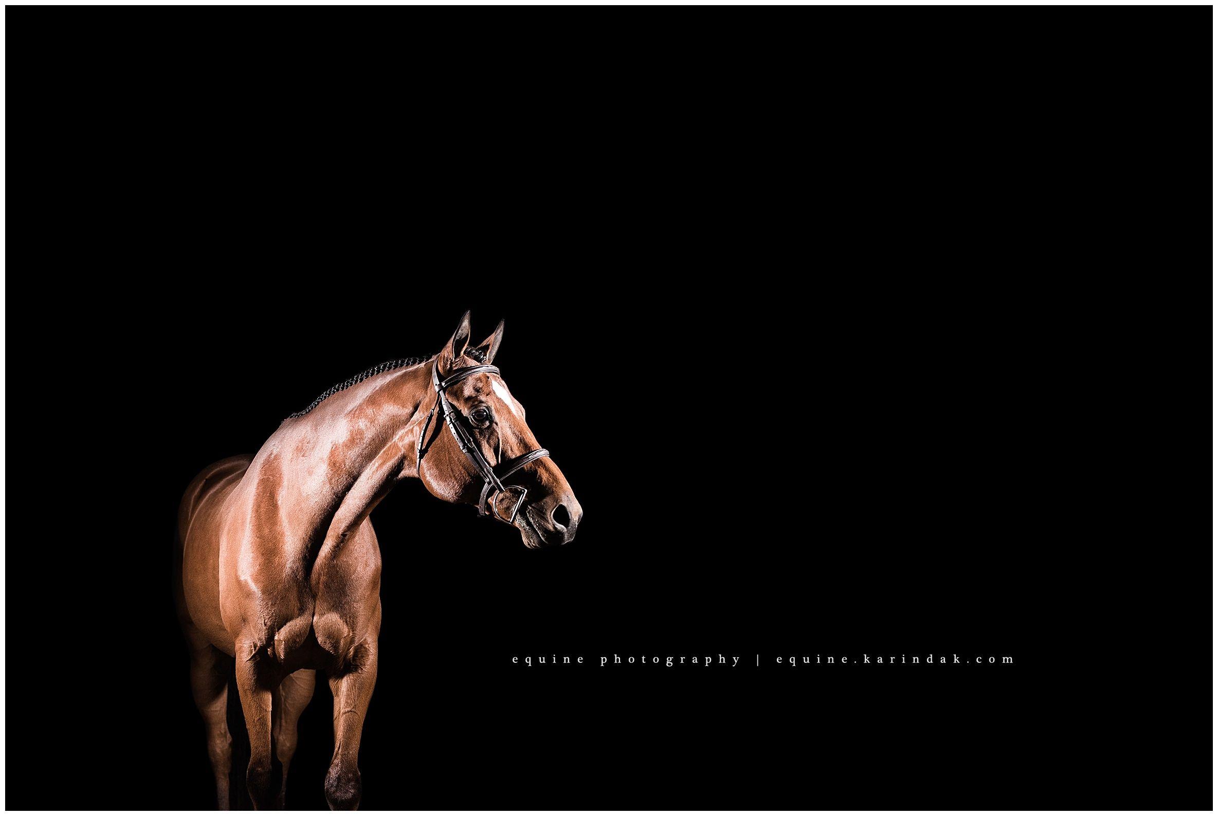 Cole Horse pictures, Horses, Black background portrait